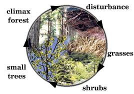 Primary Succession And Secondary Succession Venn Diagram Ecological Succession Lessons Tes Teach