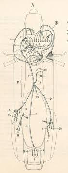 p200e wiring diagram wiring diagram and schematic p125 p200 factory repair manual wiring pic jpg