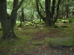 Camp clearing (Riverclan) Images?q=tbn:ANd9GcTOitMWvqXz0k8FNkTexKqSkV2DAew_oqbx0XtjgEWw3PEdxBPCaQ