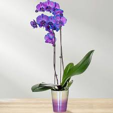 flowers ftd send flowers plants gifts same day flower delivery