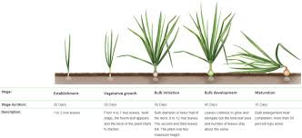 Wheat Growth Stages Chart Crop Guide Growing Onions Haifa Group