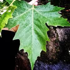 oh autumn…. …welch gemüt du in mir weckst. das… | by soulfoodstory | Medium