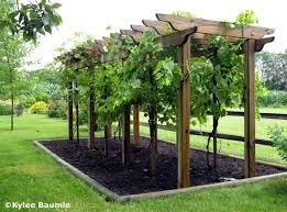Narrow grape arbor for a smaller footprint. Grow grapes with akebia or  climbing rose for additional interest. Doug, next garden bed!