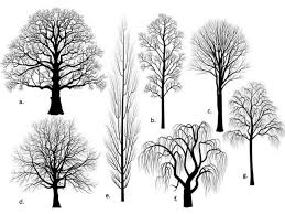 11 Best Belgian Fences Images On Pinterest  Apple Tree Espalier Fruit Tree Shapes