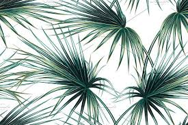 Palm Leaf Pattern Extraordinary Tropical Palm Leaves Pattern Palm Leaves HD Wallpaper