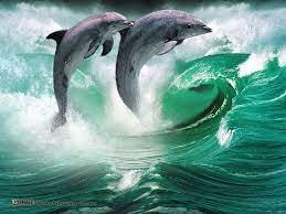 Hintergrundbilder Nature Wildlife ...