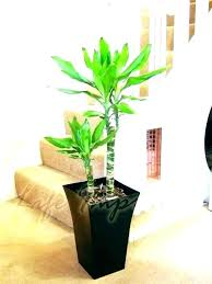 plant vases indoor tall plant pot tall plant pot large indoor plant pots mesmerizing large indoor