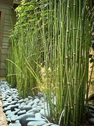 Small Picture landscape ideas bamboo trees garden design stone paths Patios