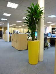 office plant displays. Modren Office Corporate Office Plants Professional Plant Displays Image Of Workspace With  A Yellow Vase To S