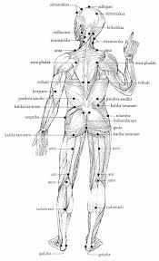 Marma Points Chart Ayurvedic Massage Marma Therapy
