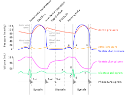Contraction Timing Chart Printable Cardiac Cycle Wikipedia