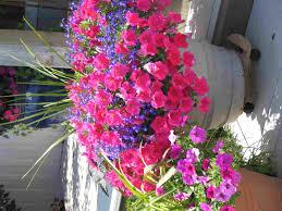 Container Gardening  Bonnie PlantsContainer Garden Plans Flowers
