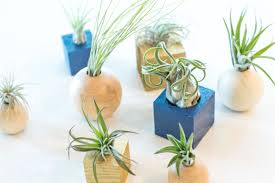 diy air plant holders easy and fun holders you can make at home with just