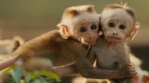Bildergebnis für میمون