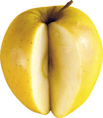 yellow apple png. apple open yellow png e
