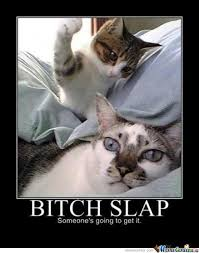 Cat Dog Bitch Slap Memes. Best Collection of Funny Cat Dog Bitch ... via Relatably.com