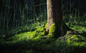wallpapers hd forest. Wonderful Forest Forest Wallpapers HD On Hd