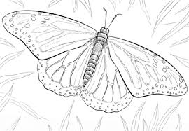 Small Picture Monarch Butterfly coloring page Free Printable Coloring Pages