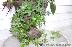low light indoor plants houseplants