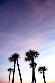 palm trees tumblr. Rhwpnaturecom Es Sea Peoples Island Tropical Rhrenaturescom Beach Palm Trees Tumblr