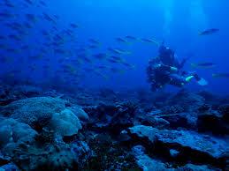 Пин от пользователя Alex Bazhan на доске Undersea World ...