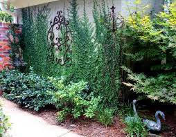 vertical gardens and green walls the