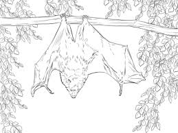 Small Picture Rodrigues Fruit Bat coloring page Free Printable Coloring Pages