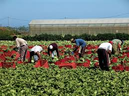 Image result for picture of labors in the fields