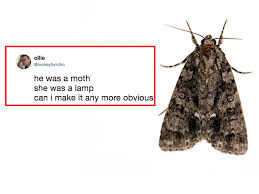 Best Funniest Moth Memes And Jokes From Twitter And Instagram Insider