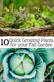 Fall Gardening Recap  Gingham GardensFall Gardening