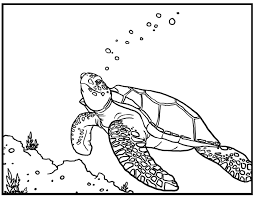 Small Picture Sea turtle coloring pages swimming underwater ColoringStar