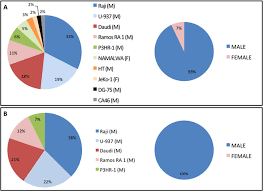 Most Used Cell Lines For Lymphoma Studies A Pie Chart