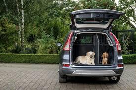 dog car barrier the best cargo