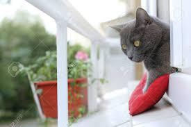 Die Katze Zu Beobachten Was Auf Der Straße Passiert Aus Dem