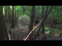 Lizard Man Lives Bishopville South Carolina Swamp Sightings