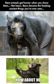 Carrie ( ^ω^ ) on Pinterest | Bears, Shaved Bear and Fat Animals via Relatably.com