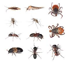 Small Black Flies In Kitchen A Z Glossary Of Household Pests Prestige Pest