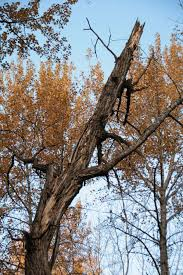 bats in alberta that use bat houses are typically those species that historically would have roosted in tree cavities these cavities are most often found
