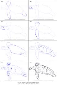 Small Picture How to Draw a Hawksbill Turtle printable step by step drawing