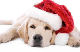cute merry christmas wallpaper dogs. Contemporary Dogs Christmas Puppy With Cute Merry Wallpaper Dogs S