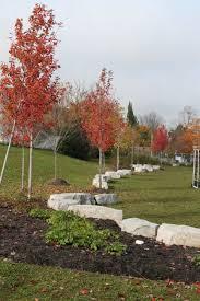 Garden Centre Kitchener Canadian Wildlife Federation Rewards Kcis Horticulture Class