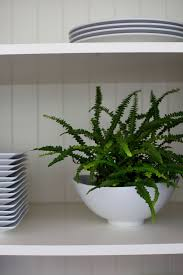 Button Fern Light Requirements Best Houseplants 9 Indoor Plants For Low Light Low Light