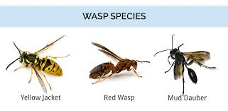 Wasp Hornet Identification What Does A Wasp Look Like