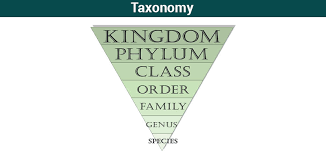What Is Taxonomy Examples Levels Classification Byjus