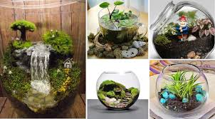 terrarium decoration ideas interest photo of what kind of plants go in a