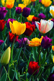 flower wallpaper for mobile phone.  Phone Pick A Device In Flower Wallpaper For Mobile Phone