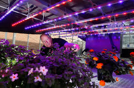 led lighting for diy led grow light instructables and plan diy led grow light weed