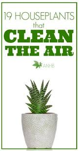 plants office garden green clean air indoor. these 19 houseplants are the best to have since they also clean air definitely good know organic florist coming carson city this spring call plants office garden green indoor
