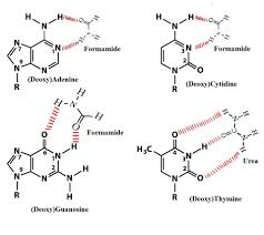 how many hydrogen bonds can urea form urea and formamide as denaturants in dgge
