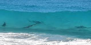 Sharks In The Surf At New Smyrna Beach Oh My Jake Scott